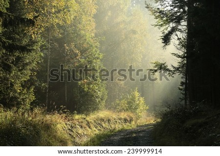 Dirt road through the forest on a misty autumn morning. - stock photo
