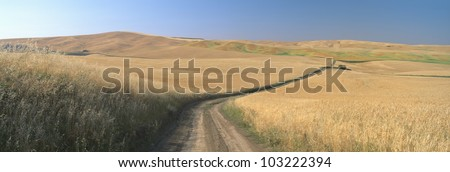 Dirt road through wheat field, Kamiak Butte, S.E. Washington - stock photo