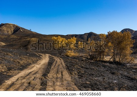 Dirt road winds through burned grassland in southern California near Santa Clarita.