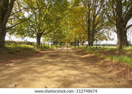 Dirt road with avenue of trees either side - stock photo