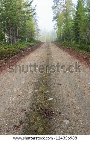 Dirt road with Moose droppings - stock photo