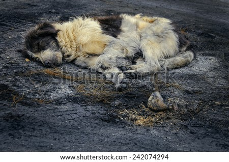 Dirty abandoned dog sleeping in the ash - stock photo