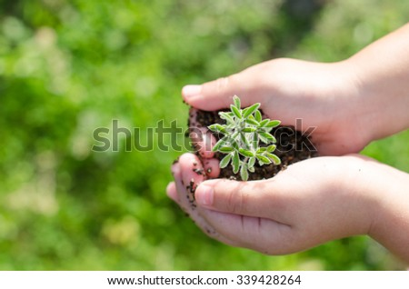 Dirty boy hands holding small young herbal sprout plant over blurred nature background. Organic fruit and vegetables. Ecology, World Environment Day, Earth Day, World food day concept. - stock photo