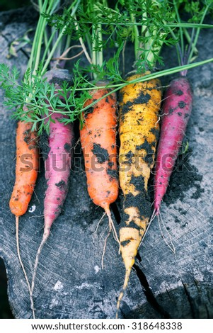 Dirty colored carrots on a wooden stump - stock photo