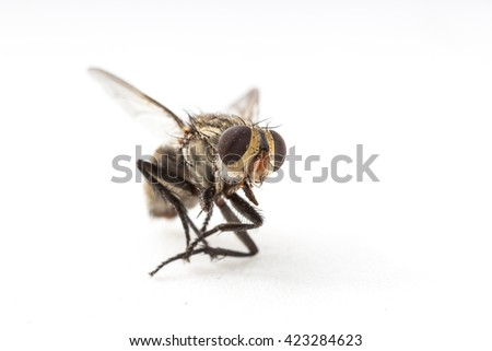Dirty Dead Fly on white background