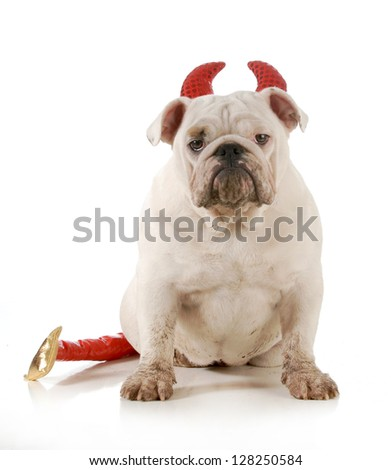 dirty dog - english bulldog wearing devil ears and tail isolated on white background - 6 months old - stock photo