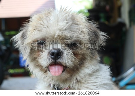 Dirty Dog Fur - stock photo