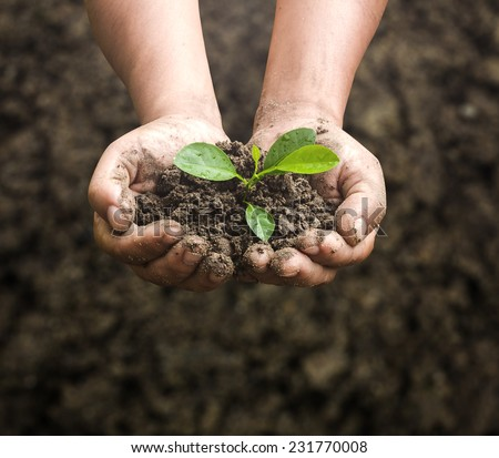 Dirty farmer hands holding thai small young herbal sprout plant. Organic Fruit Ecology Earth Hour Food Arbor Day CSR Hope Soil Hope New Life Tree Farm Dirt Land God Aroma Herb Seed Nature Save concept - stock photo
