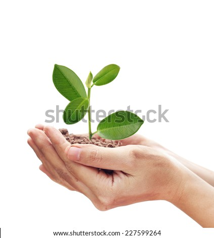 Dirty hands holding and caring a young green plant. Concept about growing a tree - love nature -  save the world. - stock photo