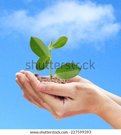 Dirty hands holding and caring a young green plant. Concept about growing a tree - love nature -  save the world.