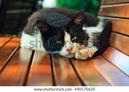 Dirty homeless cat lays on a bench in the park - stock photo