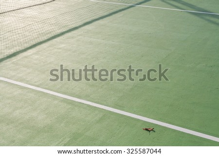 Dirty paddle tennis  field texture  white lines with old leaf - stock photo