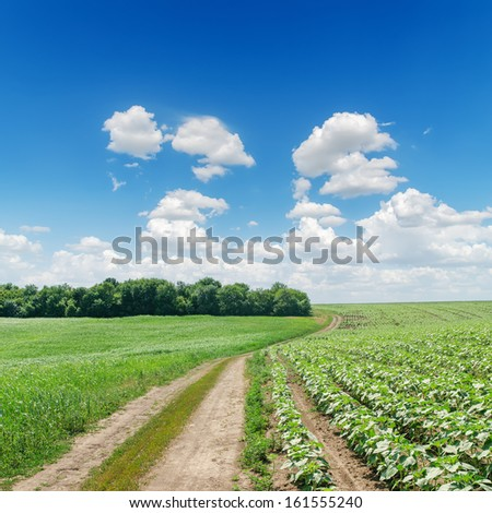 dirty road in green fields under cloudy sky