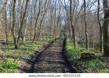 Dirty road in spring forest - stock photo