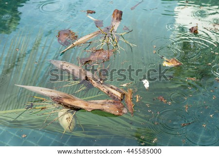 Dirty swimming pool from the coconut tree fall down into the pool - stock photo