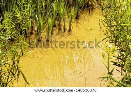 Dirty water - pollution river - stock photo