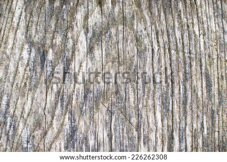 Dirty wet tree closeup. Wooden surface texture.