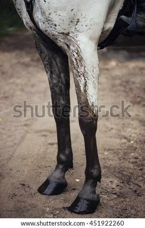 Dirty white horse, legs close up view