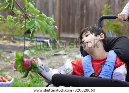 Disabled nine year old  boy in wheelchair picking apples off fruit tree - stock photo