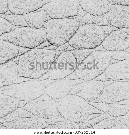 discolored snake skin texture  closeup - stock photo