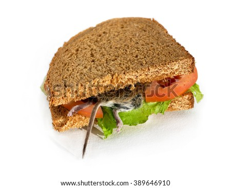 Disgusting dead rodent sandwich