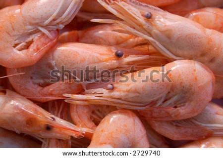 Dish from shrimps of sea of Azov. - stock photo