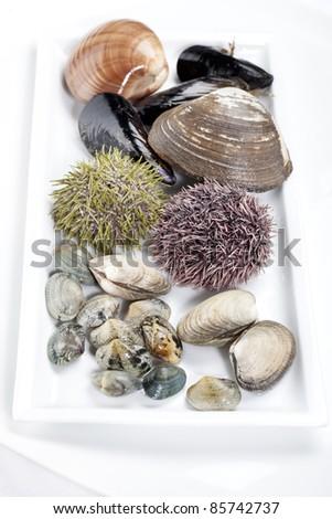 dish with seafood and shellfish sea urchins - stock photo