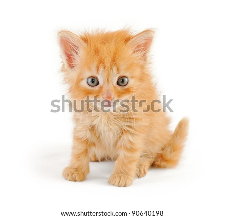 disheveled red kitten looking at the viewer, isolated on white