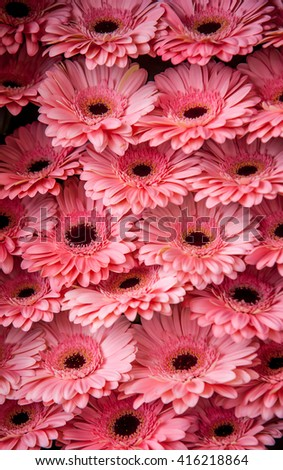Display of peach pink Gerbera daisies at Amsterdam flower market. - stock photo