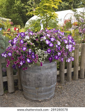 Display of Summer blooms in a farm and garden nursery Canby Oregon. - stock photo