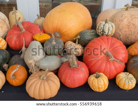 Display of Winter Squash, Pumpkins and Gourds on a table Top in Rural Devon, England, UK