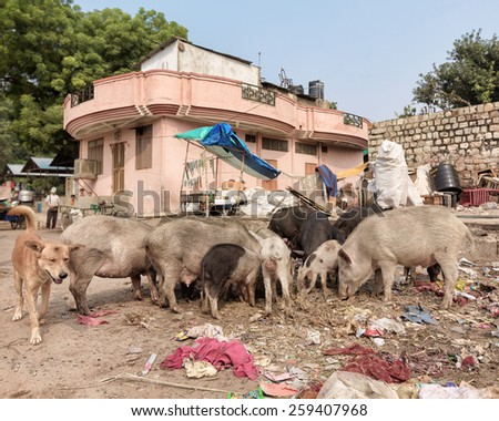 disposal dump in the middle of the asian street with stray animals eating - stock photo