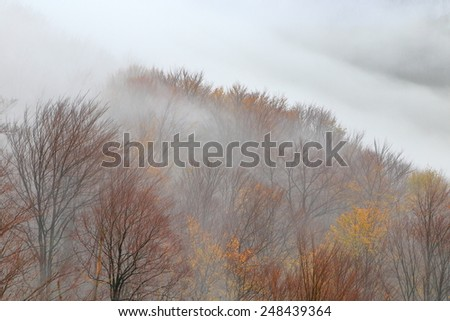 Distant clouds and thin fog cover autumn forest on a hill - stock photo