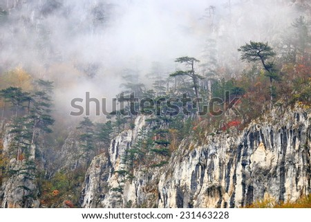 Distant trees surrounded by thin fog on the limestone ridge - stock photo
