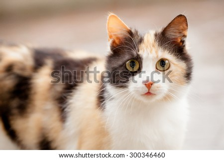 Distrustful domestic cat with big eyes