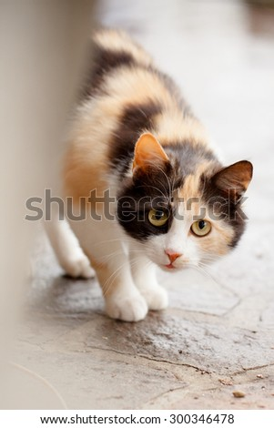 Distrustful domestic cat with big eyes hiding - stock photo