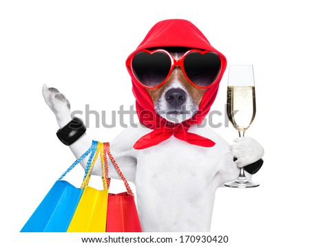 diva dog shopping like a pro , holding a bunch of bags - stock photo