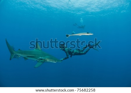 Diver and bull sharks