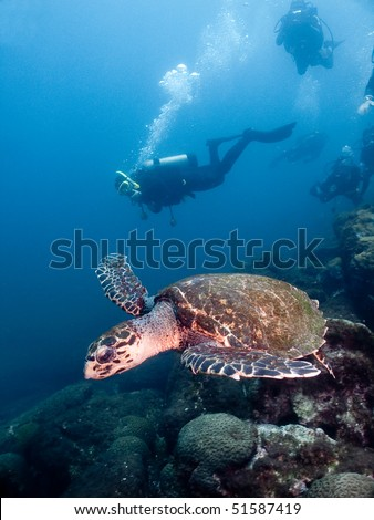 diver and hawks-bill turtle - stock photo