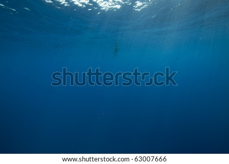 diver and ocean - stock photo
