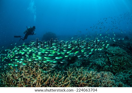 Diver and schooling fish above the coral reefs in Gili, Lombok, Nusa Tenggara Barat, Indonesia underwater photo. - stock photo