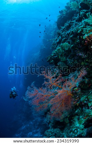 Black sea fan