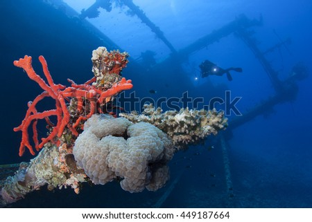Diver and the Cedar Pride wreck. Red Sponge on the foreground. - stock photo
