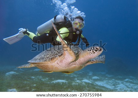 Diver and turtle swimming in Bohol sea - stock photo