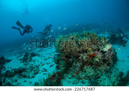 Diver and various fishes swim in Gili, Lombok, Nusa Tenggara Barat, Indonesia underwater photo. fishes are swimming above the bunch of soft coral.