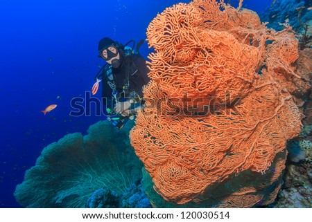 Diver exploring a large fan coral deep underwater - stock photo