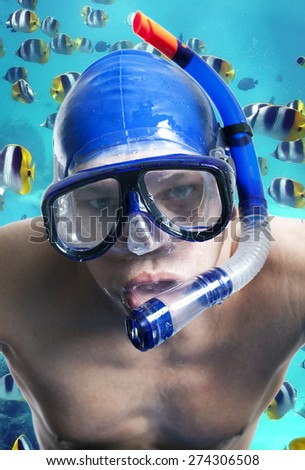 Diver. fishes. - stock photo