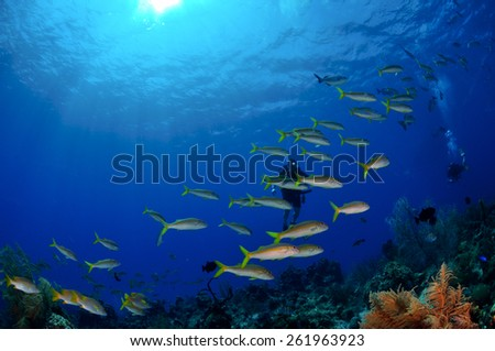 Diver immersed in fish, Grand Cayman