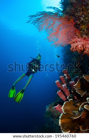 Diver in the depth watching coral reef wall. Bali, Indonesia - stock photo