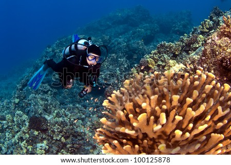 Diver looking at the Coral in Kona Hawaii - stock photo